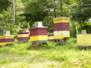 BeeYard-summer
