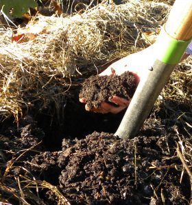 My Garden Soil