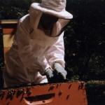 amy-beekeeper-hires-2