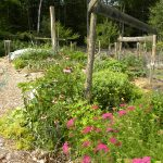 gardeninsummer2015-1-2