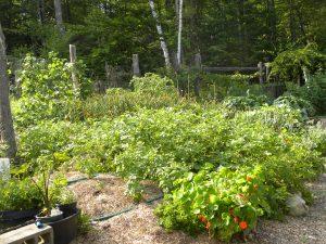 gardeninsummer2015-4-2