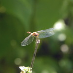 dragonfly-smaller-tweaked-tiny-2