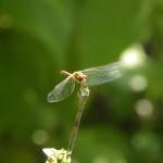 dragonflysm-2